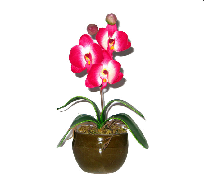 decorative flower vase online with Small Orchid Plant Dark Pink on Terrario besides Marble Flower Vase 101 likewise Small Orchid Plant Dark Pink further Clipart Pink Butterfly 1 further Artificial Plants Different Design Of Picture Ball Bonsai Can Washes Decorative Green For Flowers Unlimited.