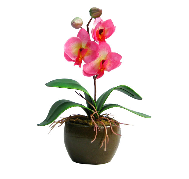 Send Small Orchid Plant With Vase (Light Pink) to All Over India ...